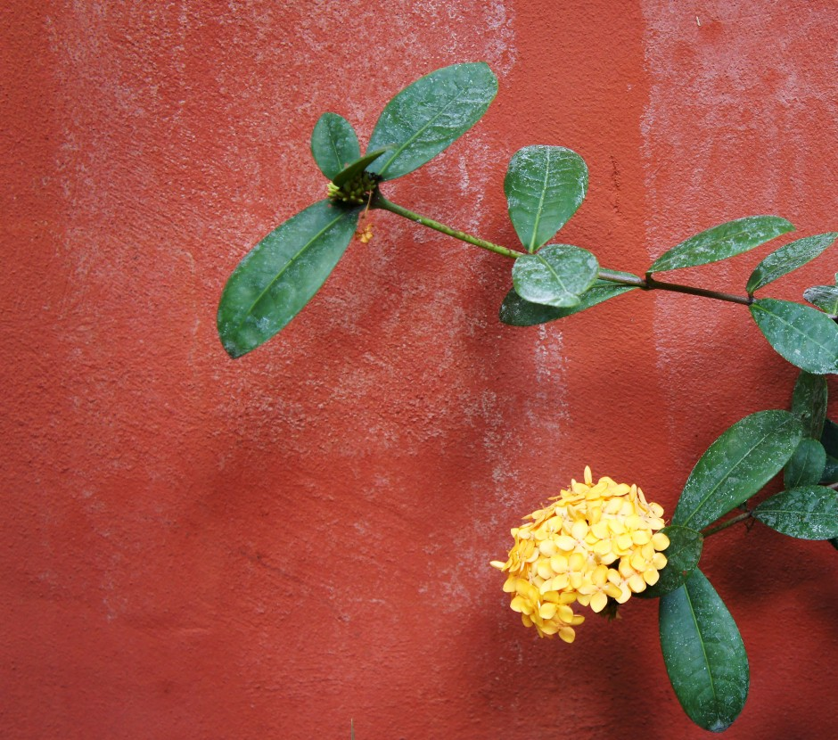 thingstoloveaboutfortlauderdale_biketowork_yellowflowers