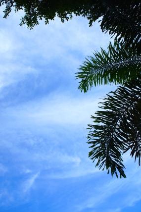blueskies_palm
