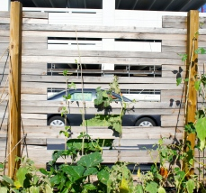 things to love about Fort Lauderdale - urban farm